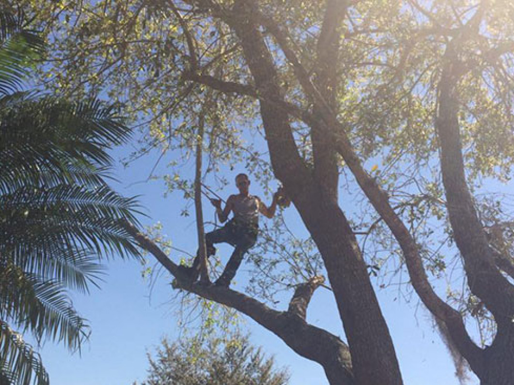tree pruning in north ft myers fl