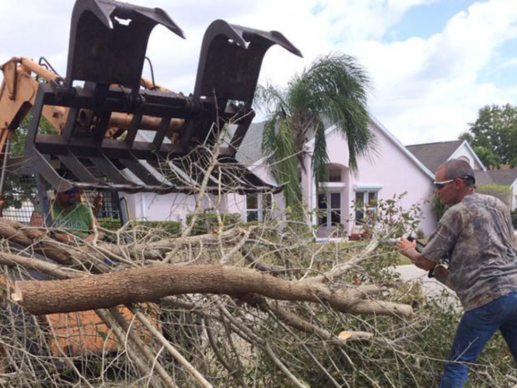 tree removal in north ft myers fl