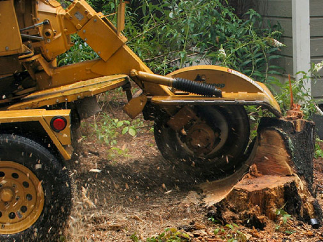 stump grinding service in north ft myers fl